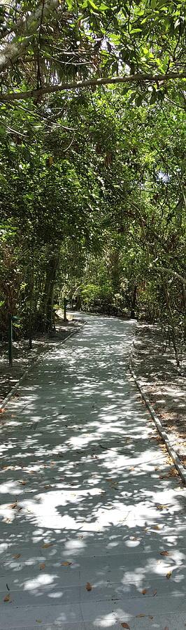 The Path Photograph by Natalia Castro