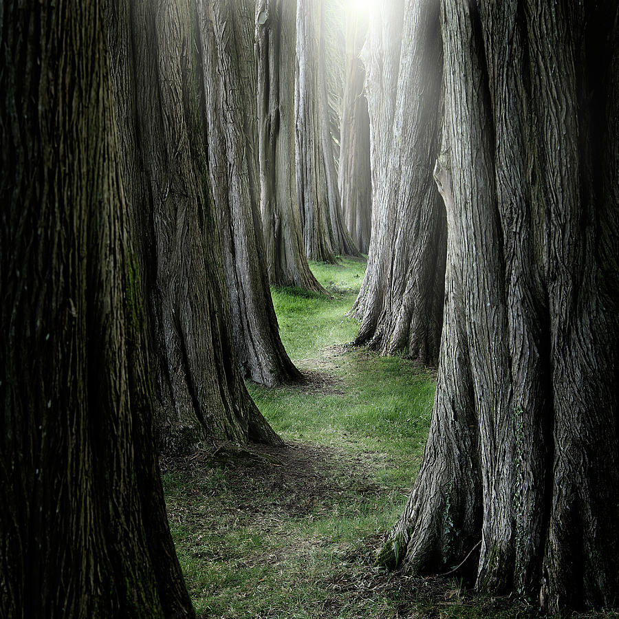 Pathway Photograph - The Pathway by Ian David Soar