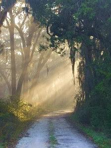 Sunrays Photograph - The Pathway by Wendy Lippard