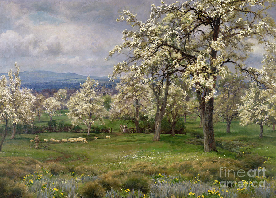 Blossom Painting - The Pear Orchard by Alfred Parsons
