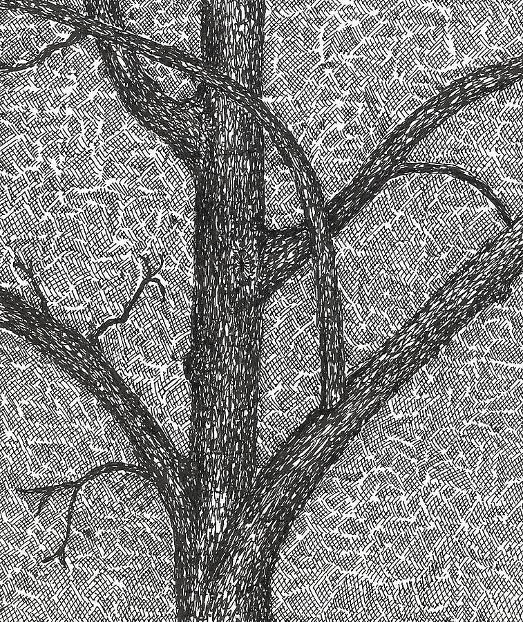 Tree Drawing - The Pecan Tree by Melanie Rochat