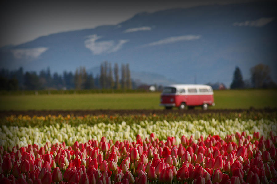 Volkswagon Bus Photograph - The Perfect Parking Spot by Karla DeCamp