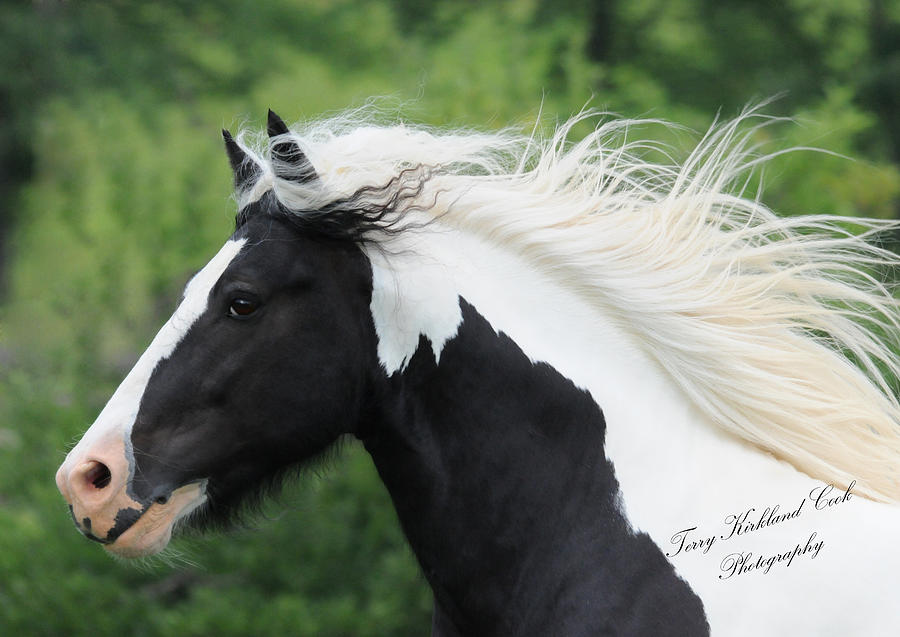 Equine Photograph - The Perfect Stallion  by Terry Kirkland Cook