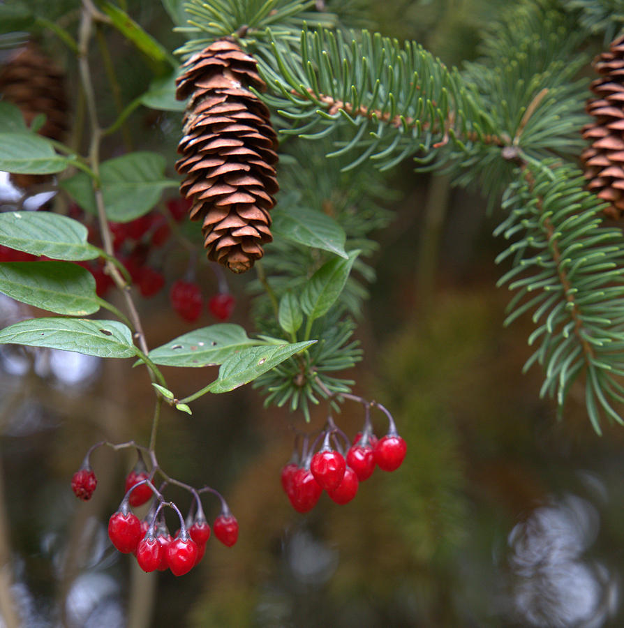 Fall Photograph - The Pine by Mark Salamon