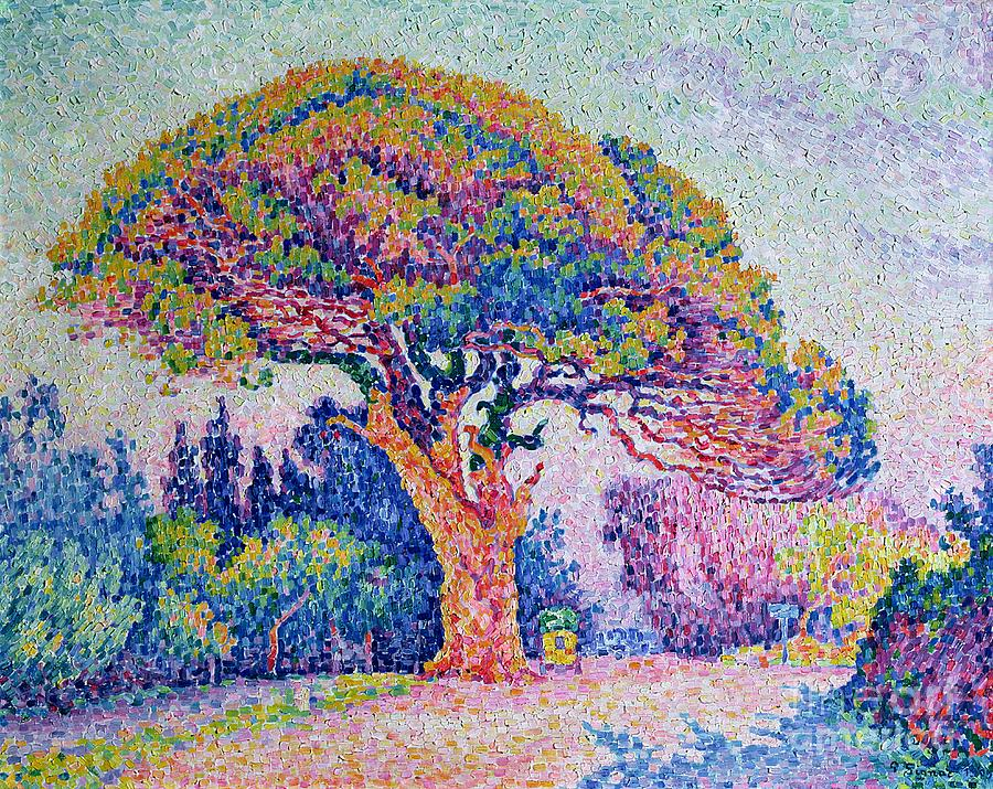The Pine Tree At St. Tropez Painting - The Pine Tree At Saint Tropez by Paul Signac