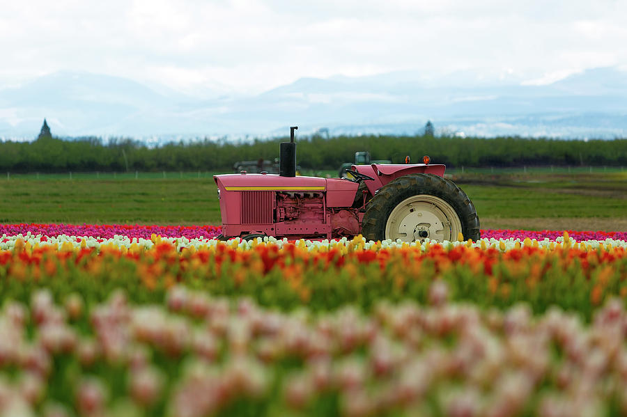 Pink Photograph - The Pink Tractor by David Gn