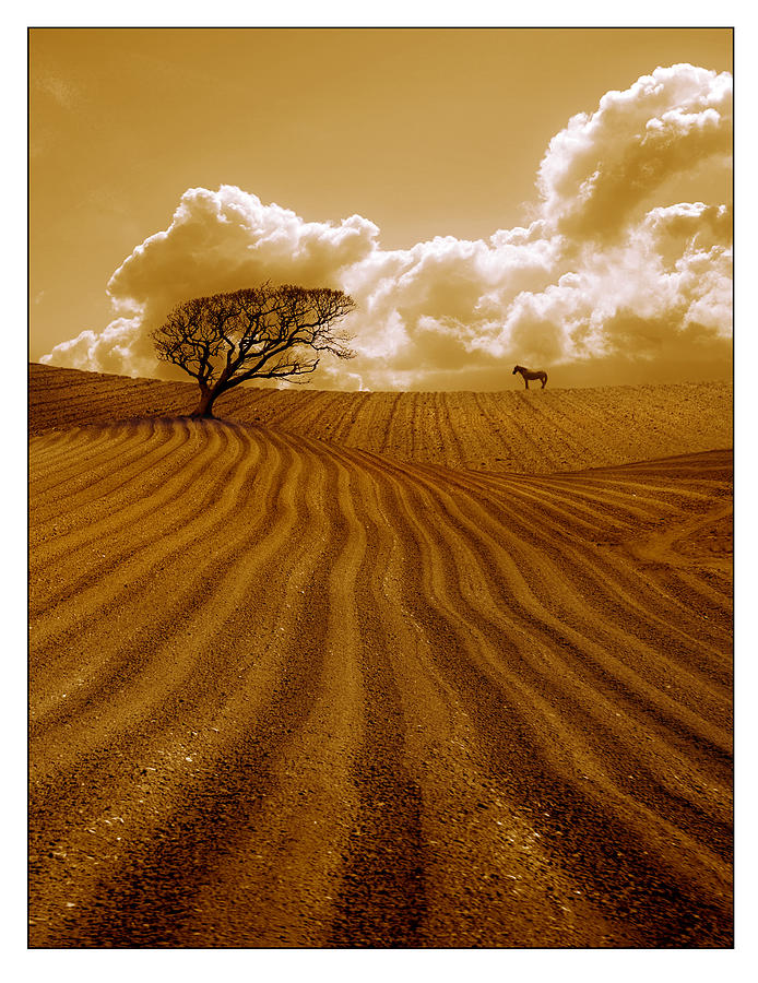 Field Photograph - The Ploughed Field by Mal Bray