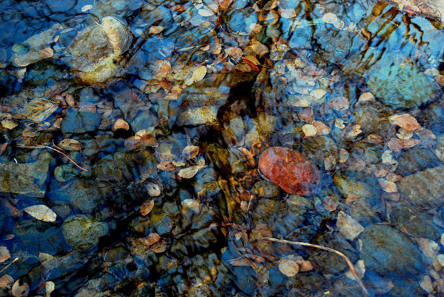 Pond Photograph - The Pond In Autumn by Marilynne Bull