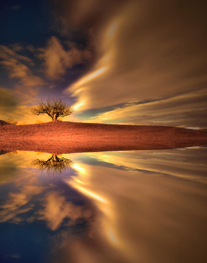 Tree Photograph - The Power by Tara Turner