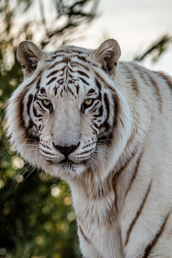 Animal Photograph - The Power Within by Teresa Wilson
