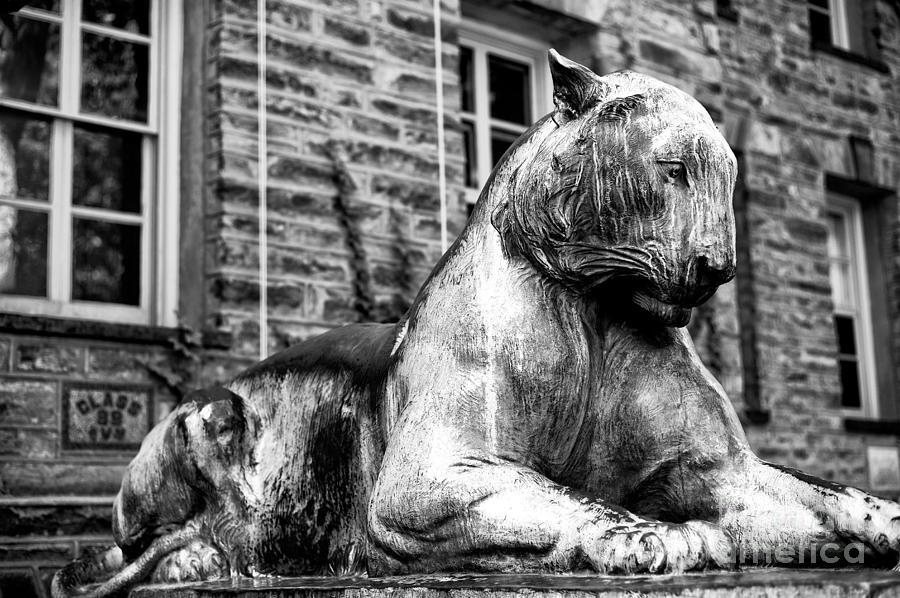 Princeton Tiger Photograph - The Princeton Tiger by John Rizzuto
