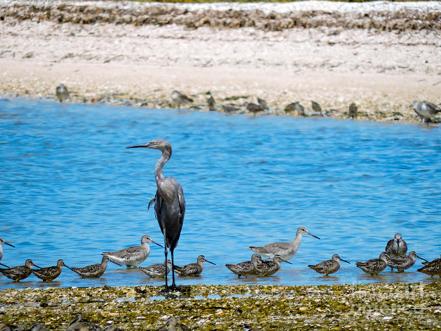 Blue Heron Photograph - The Procession  by Marilee Noland