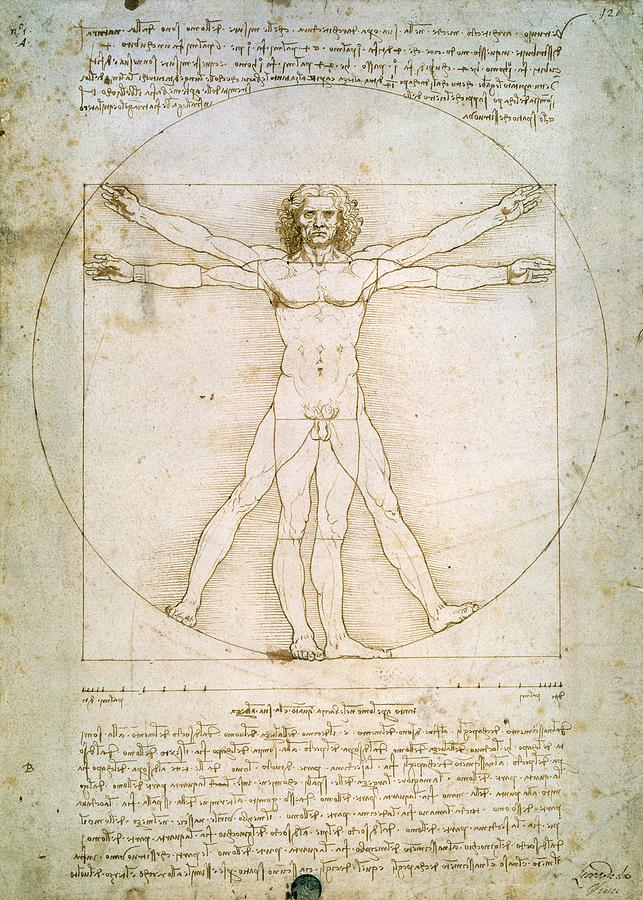 The Painting - The Proportions Of The Human Figure  by Leonardo Da Vinci