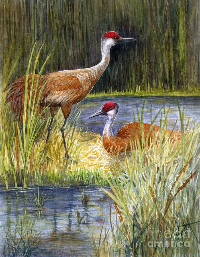Sandhill Cranes Painting - The Protector - Sandhill Cranes by Marilyn Smith