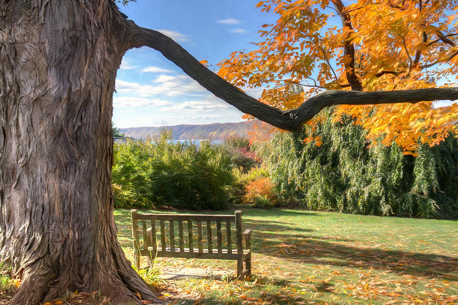 Bench Photograph - The Reading Bench by Zev Steinhardt