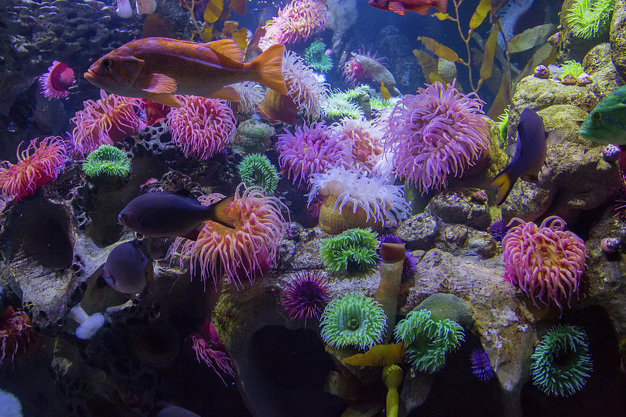 Fish Photograph - The Reef by Betsy Knapp