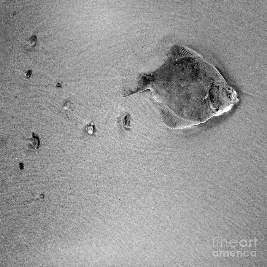 Fish Photograph - The Relief by Angel Ciesniarska