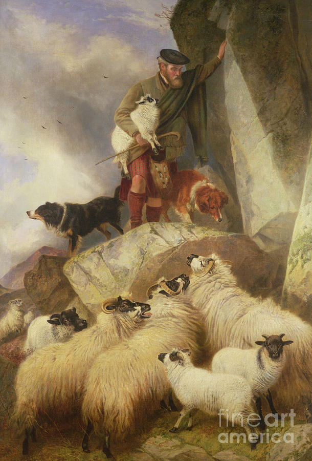 Sheep Painting - The Rescue by Richard Ansdell