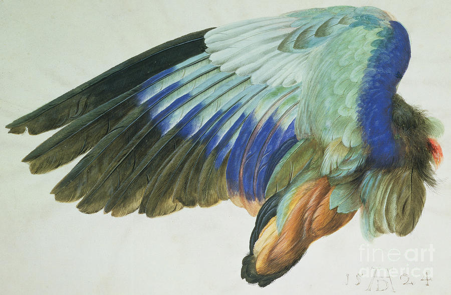 Roller Painting - The Right Wing Of A Blue Roller by Albrecht Durer
