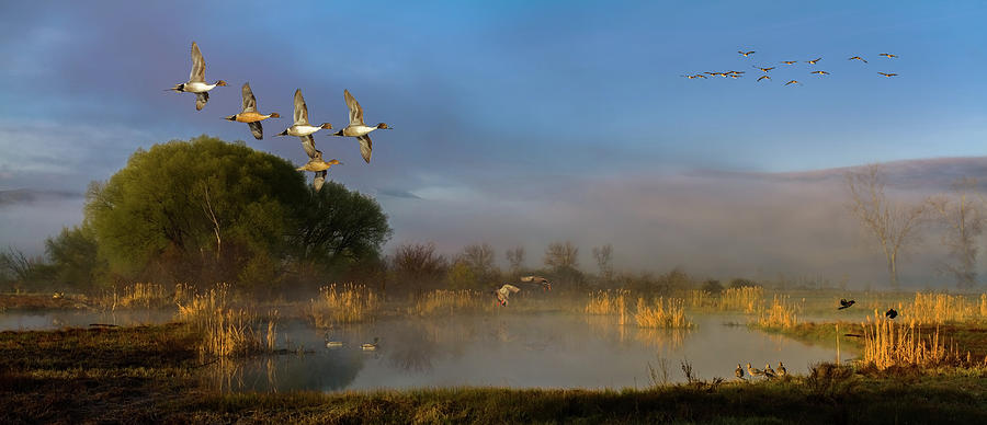 Agelaius Phoeniceus Photograph - The River Bottoms by TL Mair