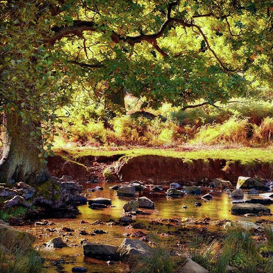 Nature Photograph - The River Lin , Bradgate Park by John Edwards