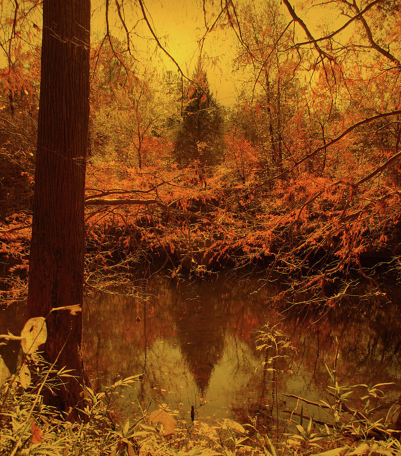 Gold Photograph - The Rivers Echo by Nina Fosdick