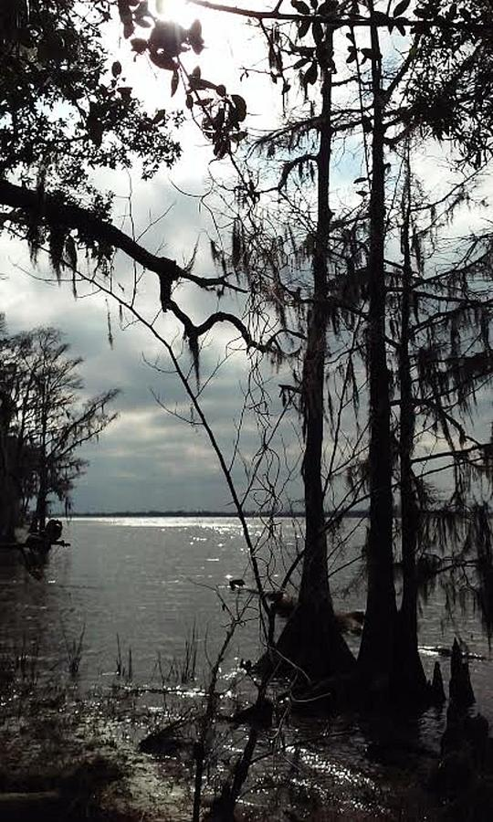 Nature Photograph - The Rivers Edge by Sheila Renee Parker