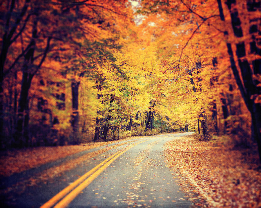 Autumn Landscape Photograph - The Road Less Traveled by Lisa Russo