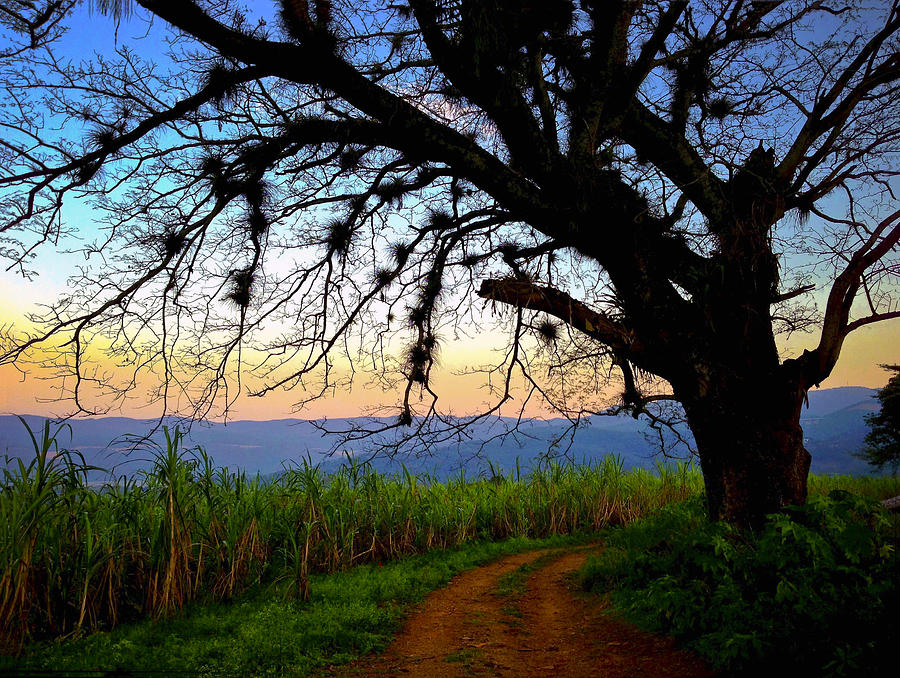 Hiking Photograph - The Road Less Traveled by Skip Hunt