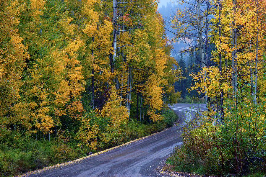 The Road Of Beauty Photograph