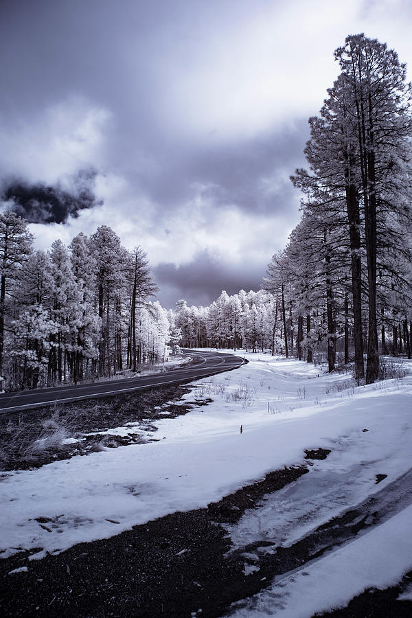Arizona Photograph - The Road To Snow by Cathy Franklin