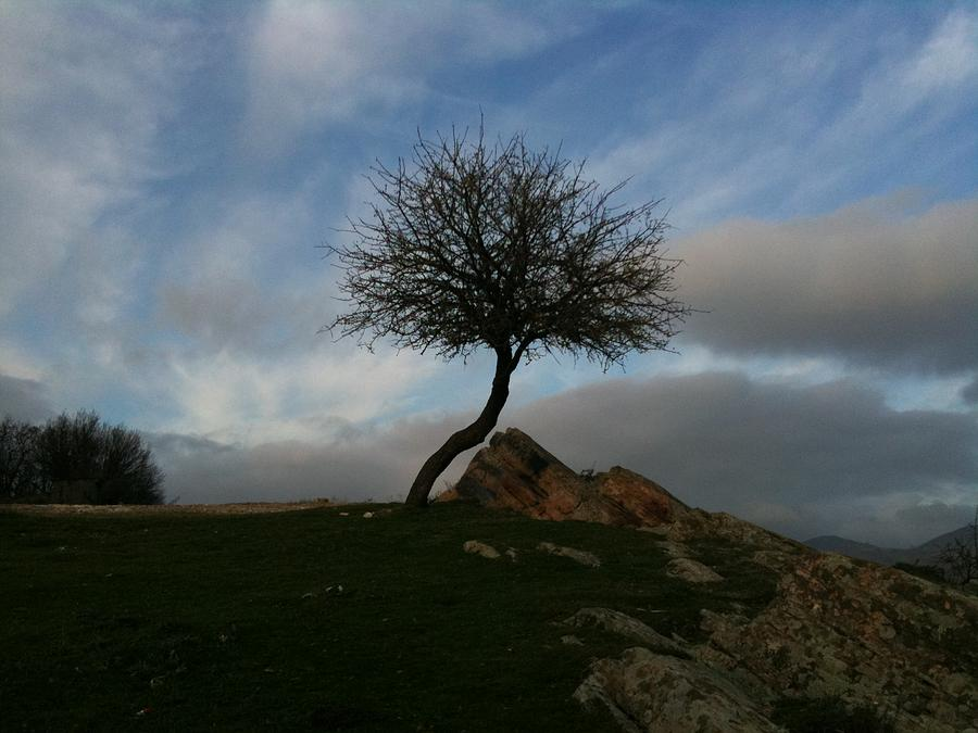 The Rock And The Tree1 Photograph by Kostas Antoniou