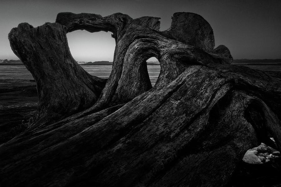 Abstract Photograph - The roots of the Sleeping Giant BW by Jakub Sisak