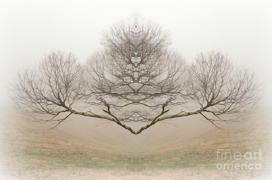 Rorschach Photograph - The Rorschach Tree by Jim Cook