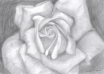 Rose Drawing - The Rose by Crystal Sons