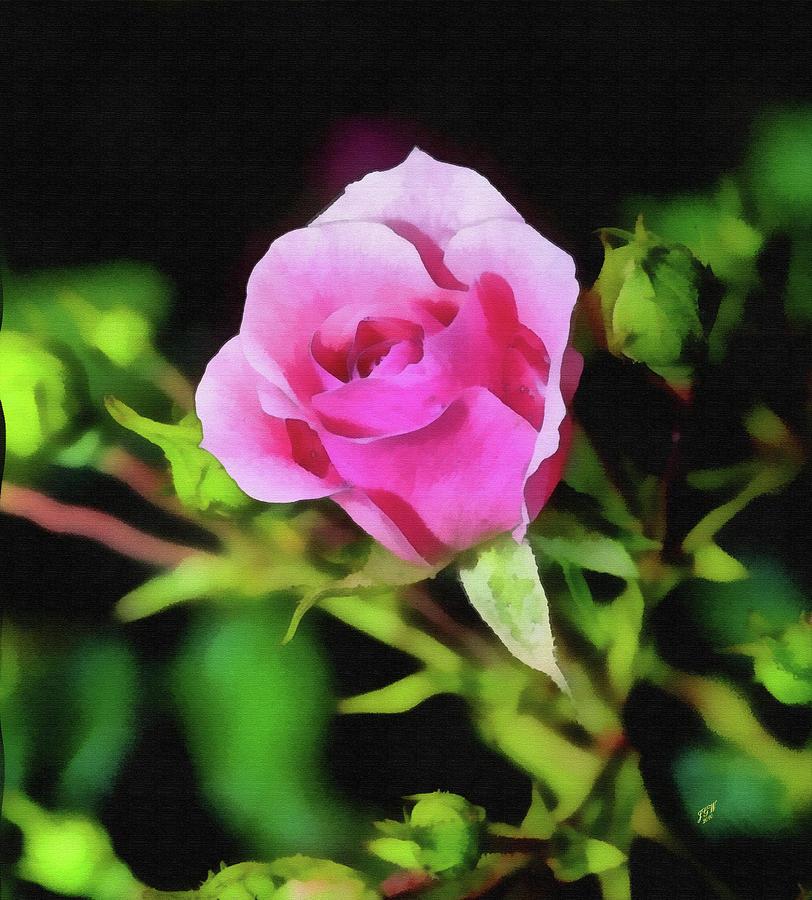 The Rose Mixed Media by John Winner