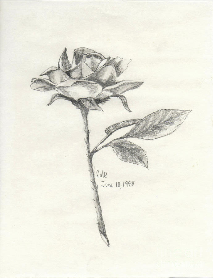 Rose Drawing - The Rose by Larry Cole