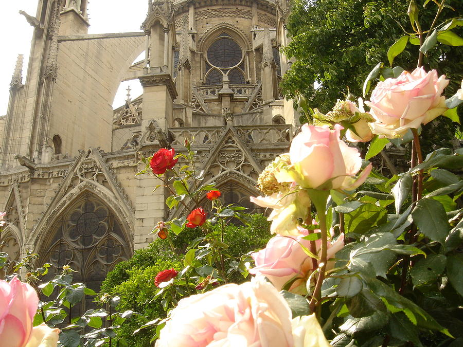 Spring Photograph - The Roses Of Notre Dame by John Julio