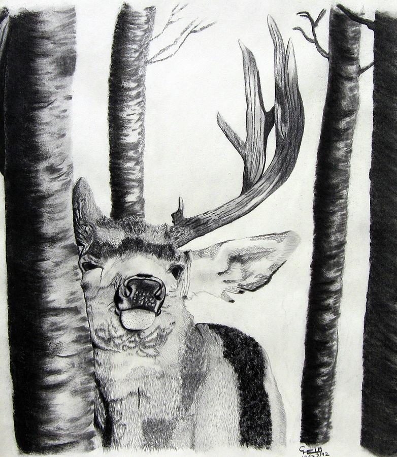 Orca Drawing - The Rutt by Mayhem Mediums