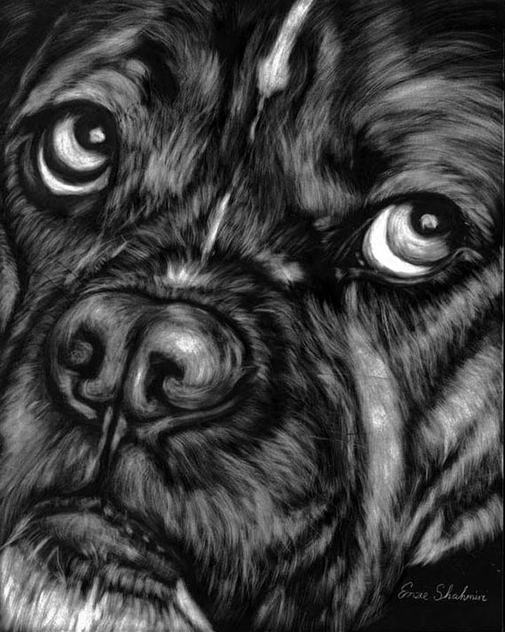 Animals Painting - The Sad Boxer by Enzie Shahmiri