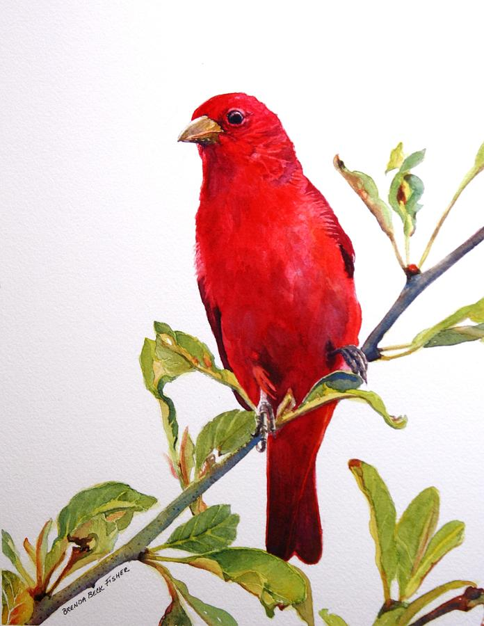 Songbird Painting - The Scarlett Tanager  by Brenda Beck Fisher