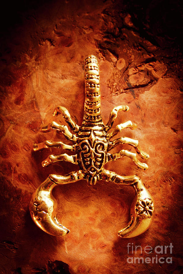 Jewellery Photograph - The Scorpion Scarab by Jorgo Photography - Wall Art Gallery