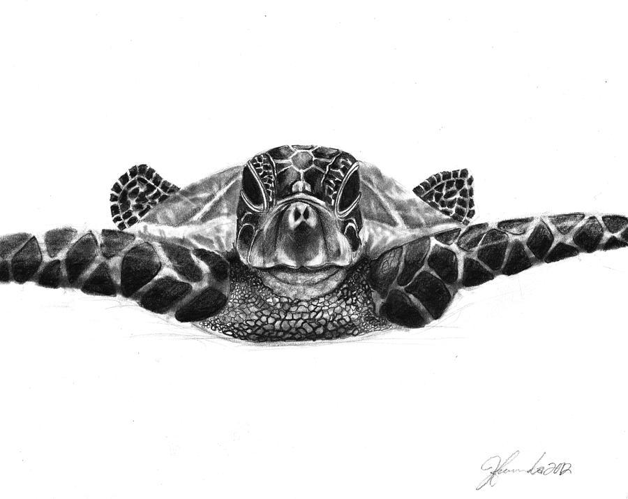 Sea Turtle Drawing - The Sea Traveler by J Ferwerda