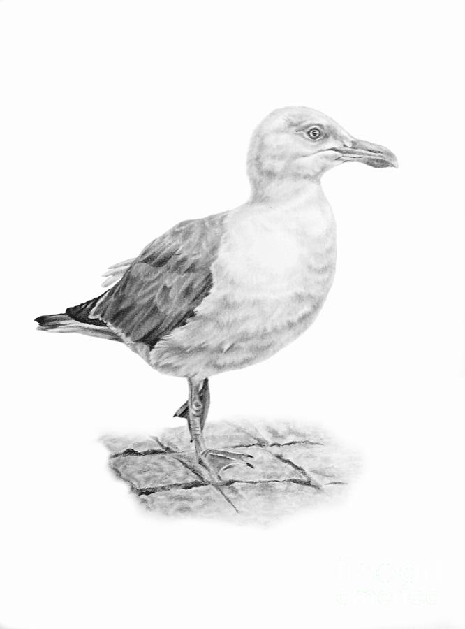 The Seagull Strut by Pencil Paws