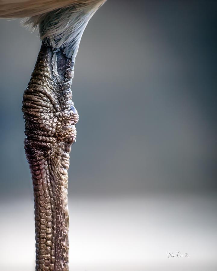 Seagull Photograph - The Seagulls Knee  by Bob Orsillo