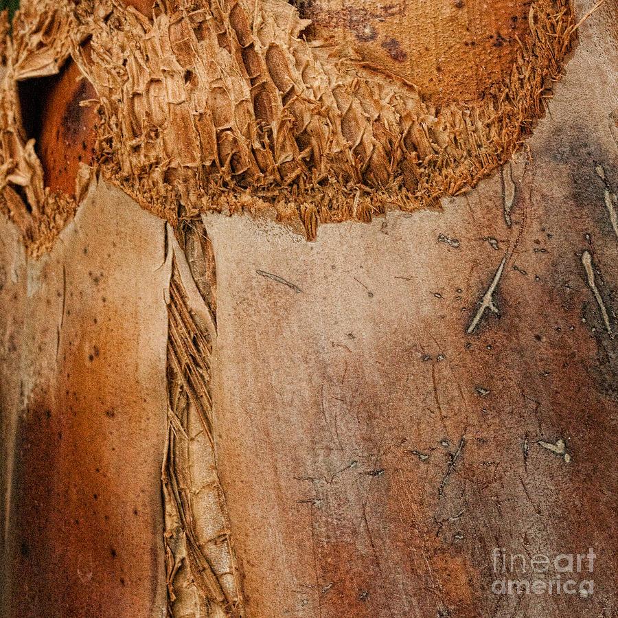 Bark Photograph - The Seam by Marilyn Cornwell