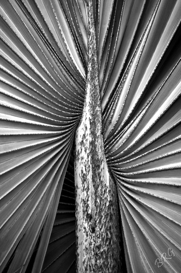 Botanical Abstract Photograph - The Second Half by Ben and Raisa Gertsberg