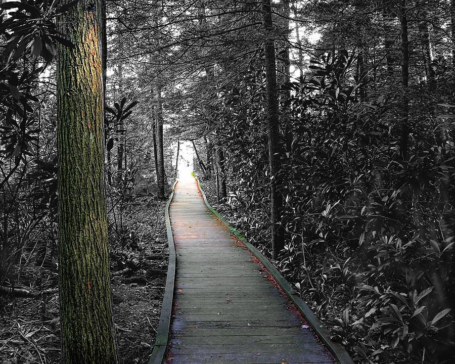 Boardwalk Photograph - The Secret Garden by John Mueller