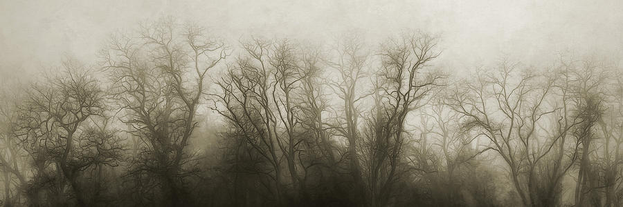Foggy Photograph - The Secrets of the Trees by Scott Norris