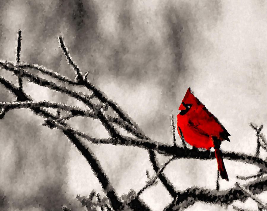 Cardinal Photograph - The Sentinel by Kristin Elmquist